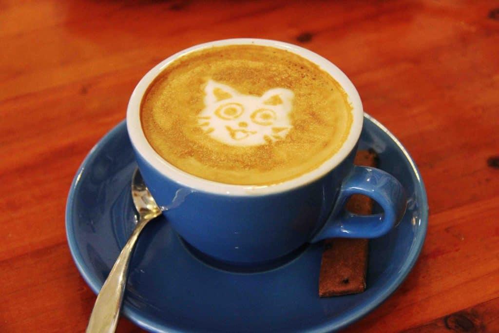 Seoul Cat Cafe