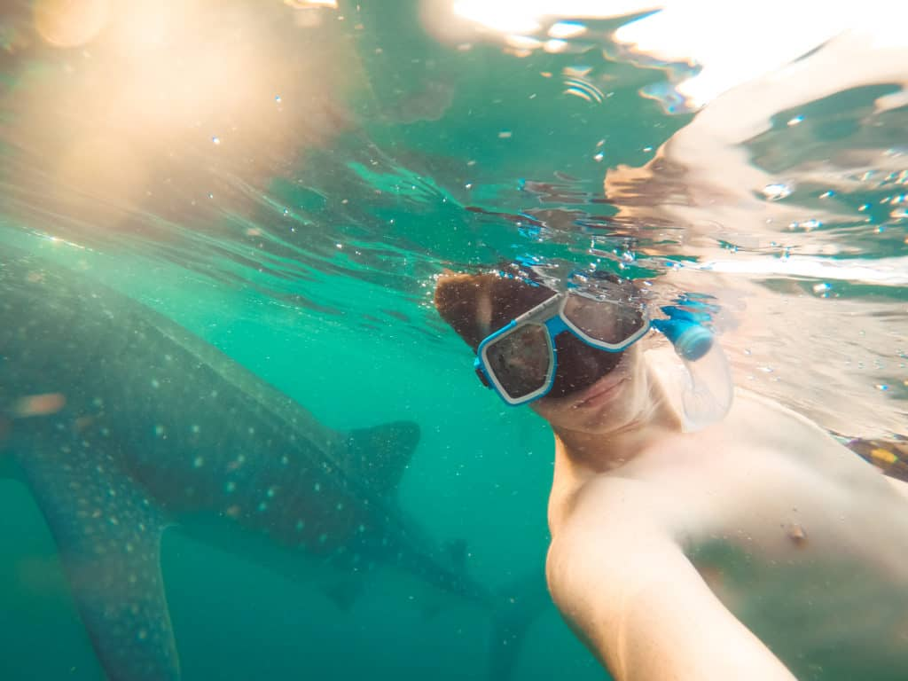 Jordan snorkeling with sharks!